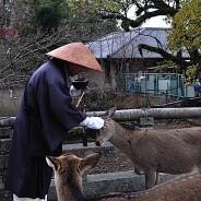 Budismo e compaixão aos animais: reflexão sobre a Declaração de Cambridge.