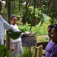 Cubano do Mais Médicos reduz uso de antibióticos em aldeia indígena ao resgatar plantas medicinais