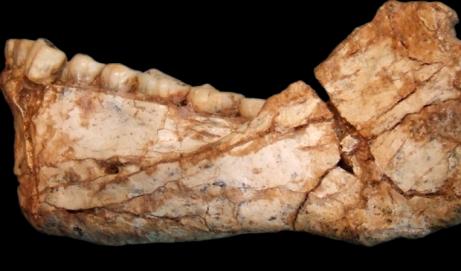 Homo sapiens é 100 mil anos mais velho do que se imaginava